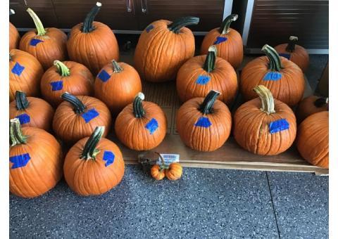 Pumpkins for sale,