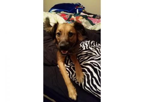 Missing dog in Russell